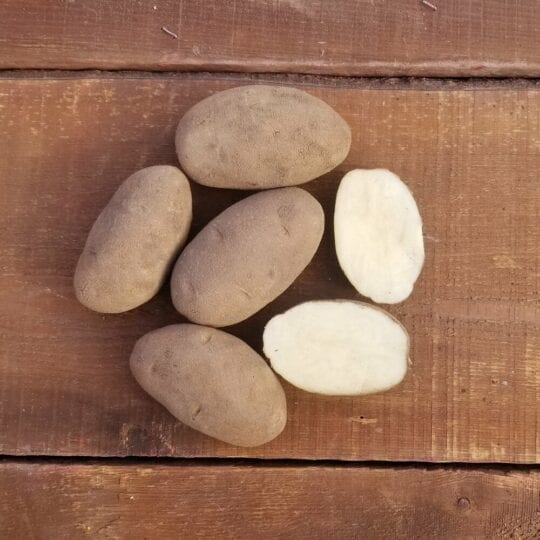 Potatoes – Goldrush Russet