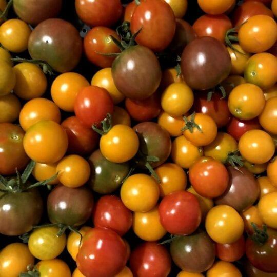 Cherry Tomatoes – pint